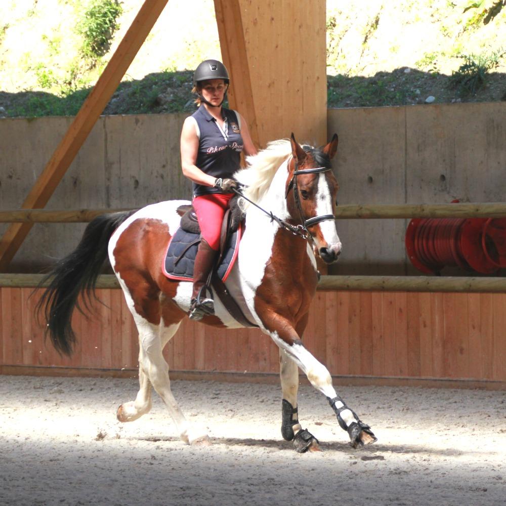 Cheval et cavalière au galop dans un manège à Chambéry
