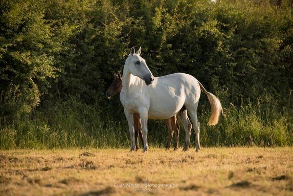 La pension de cheval en Savoie se situe à Chambéry à Saint-Hélène du Lac