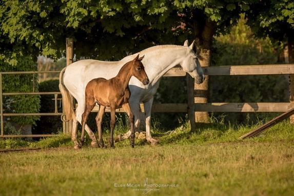 Mettre en pension son cheval en Savoie, à Saint-Hélène du Lac au centre équestre Juventin