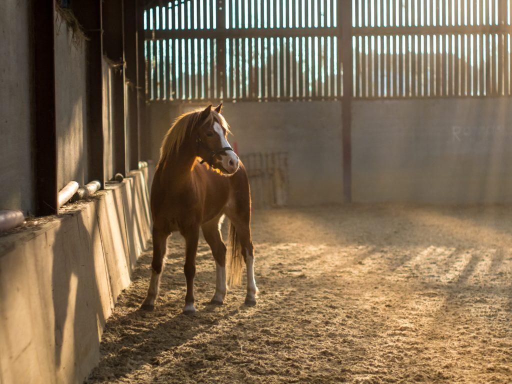 Comment longer son cheval ? Explication de la méthode. Cours avec un moniteur équestre en Savoie.